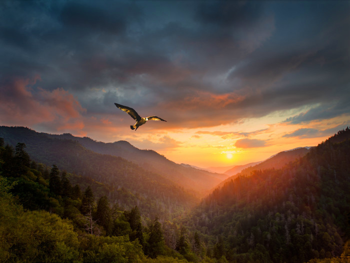 hawk sunset over hills and valley