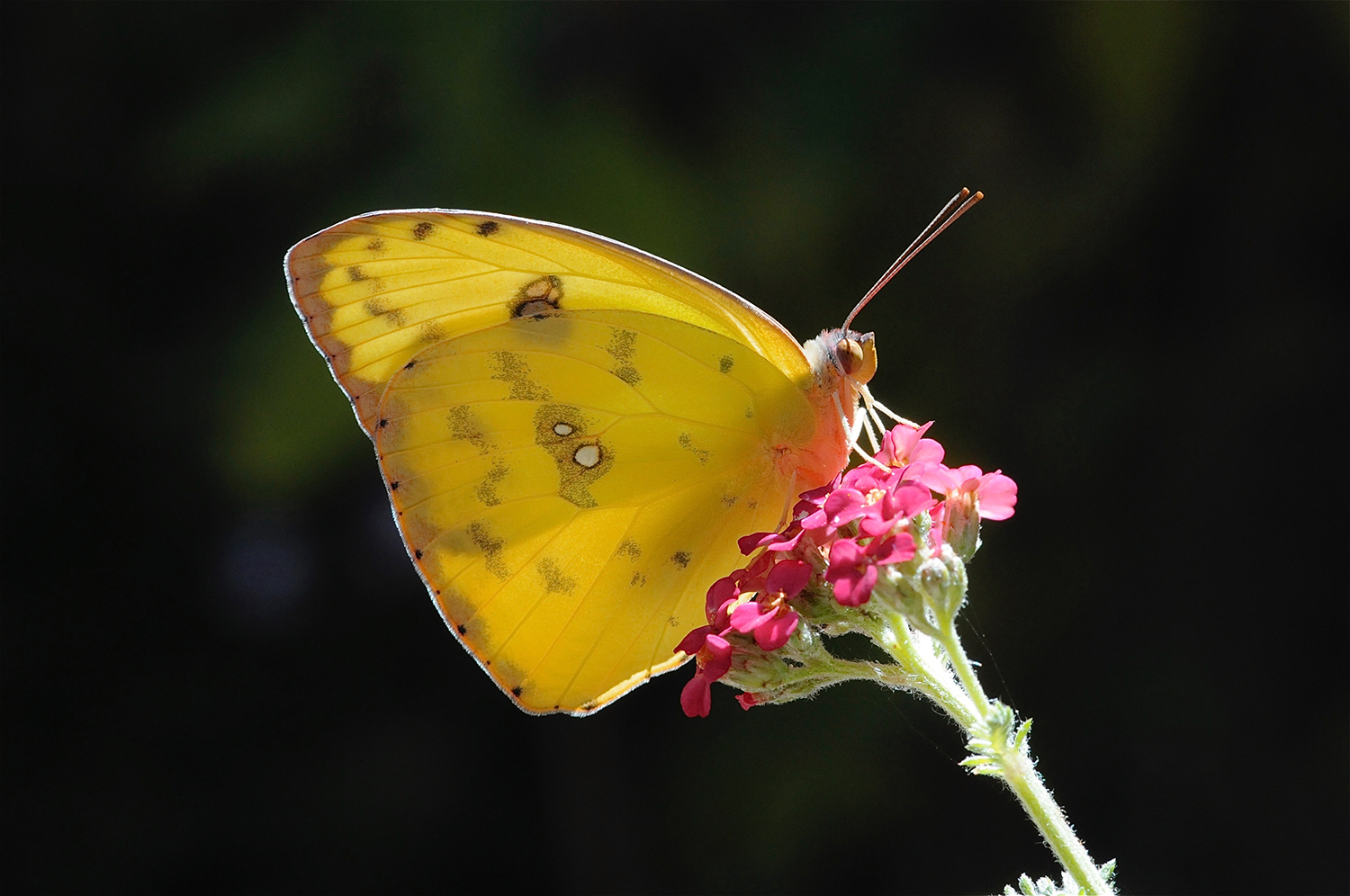 Art & Photography | The White Butterfly Fund